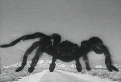 tarantula7.jpg