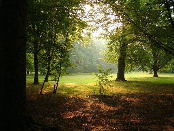 bahar-orman.jpg