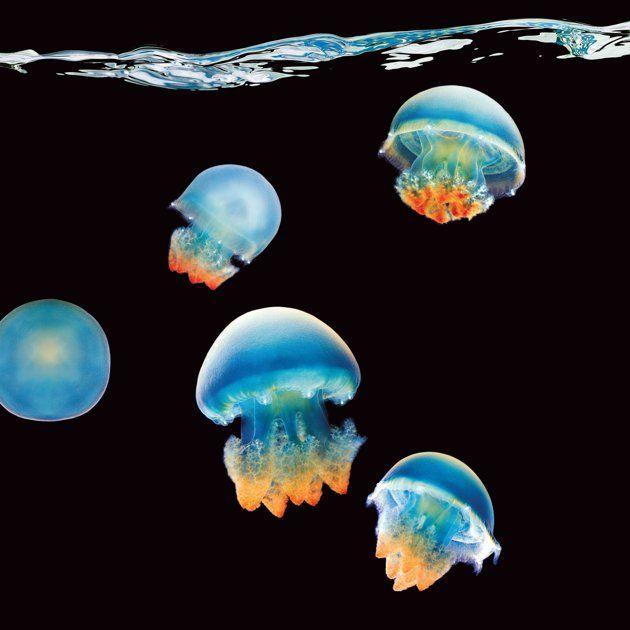 deniz-anasi.jpg